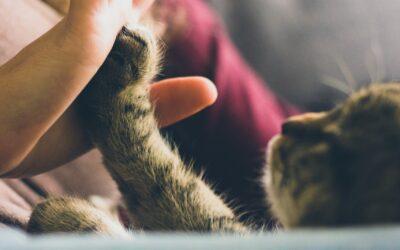 Hos Herning dyrehospital er dit kæledyr i trygge hænder